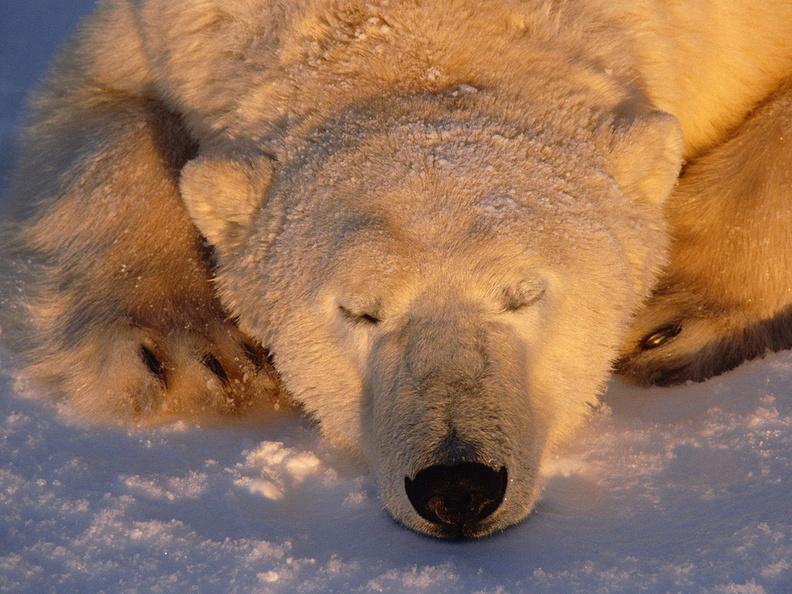 Animaux 57 fonds ecran for Fond ecran gratuit animaux