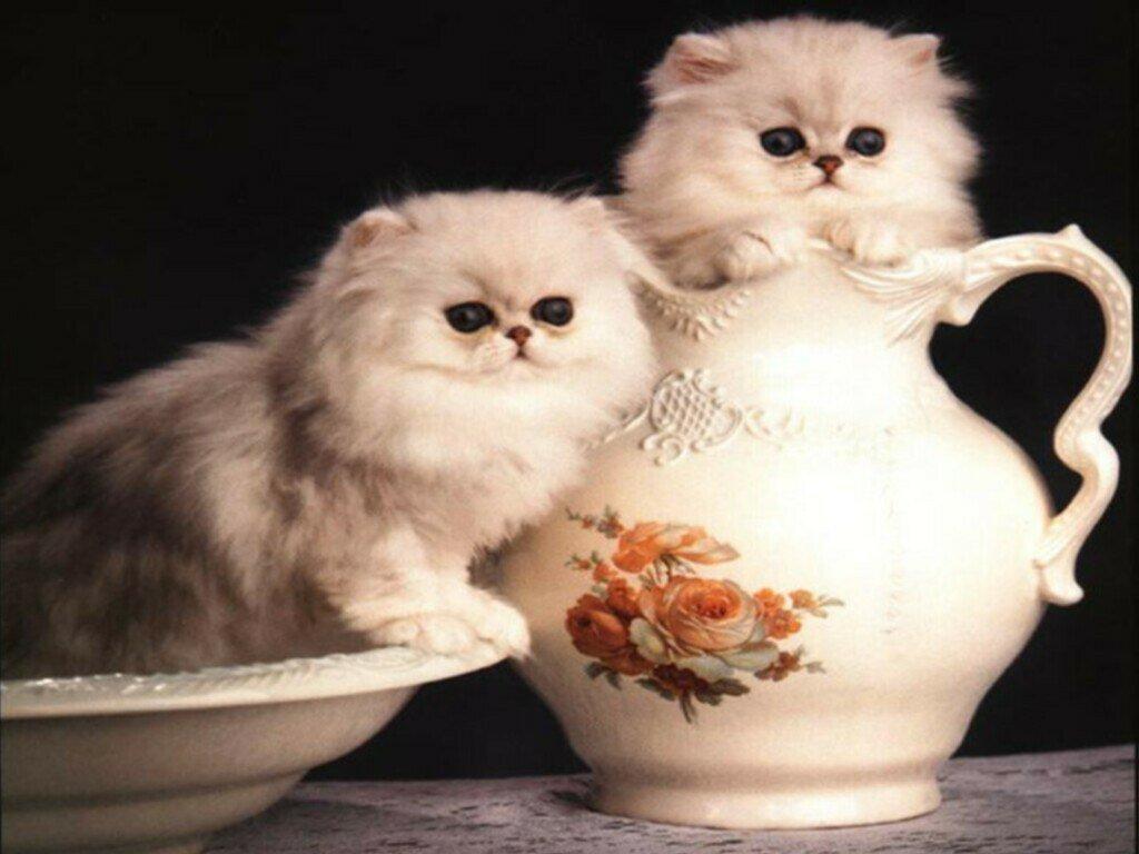 http://fonds-ecran-gratuits.fr/galleries/animaux/chats/image21.jpg