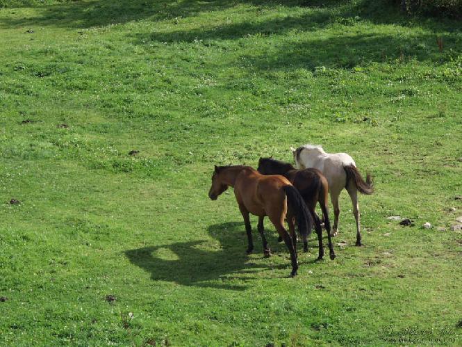 Animaux chevaux 3 fonds ecran de 25 000 fonds d 39 ecran - Chevaux gratuits ...
