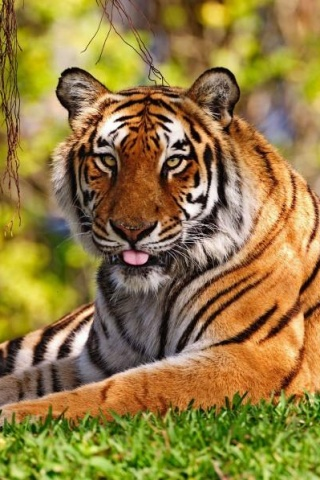 Animal 65 fonds ecran gratuits for Fond ecran gratuit animaux